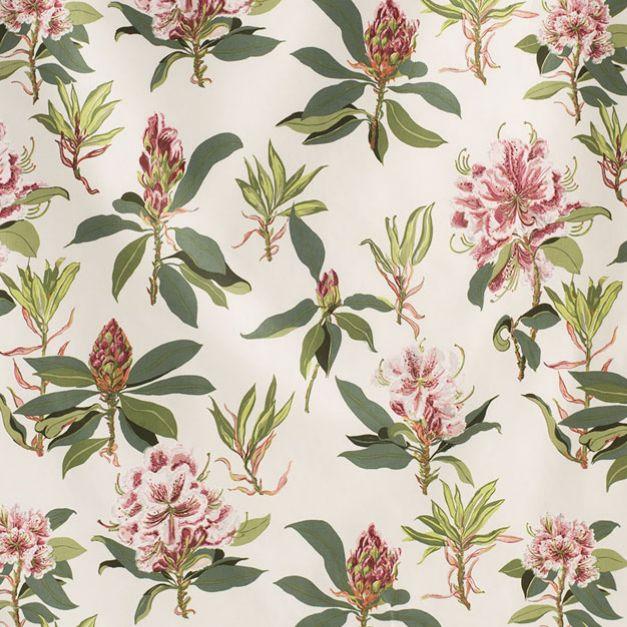 Rhododendron Sprig